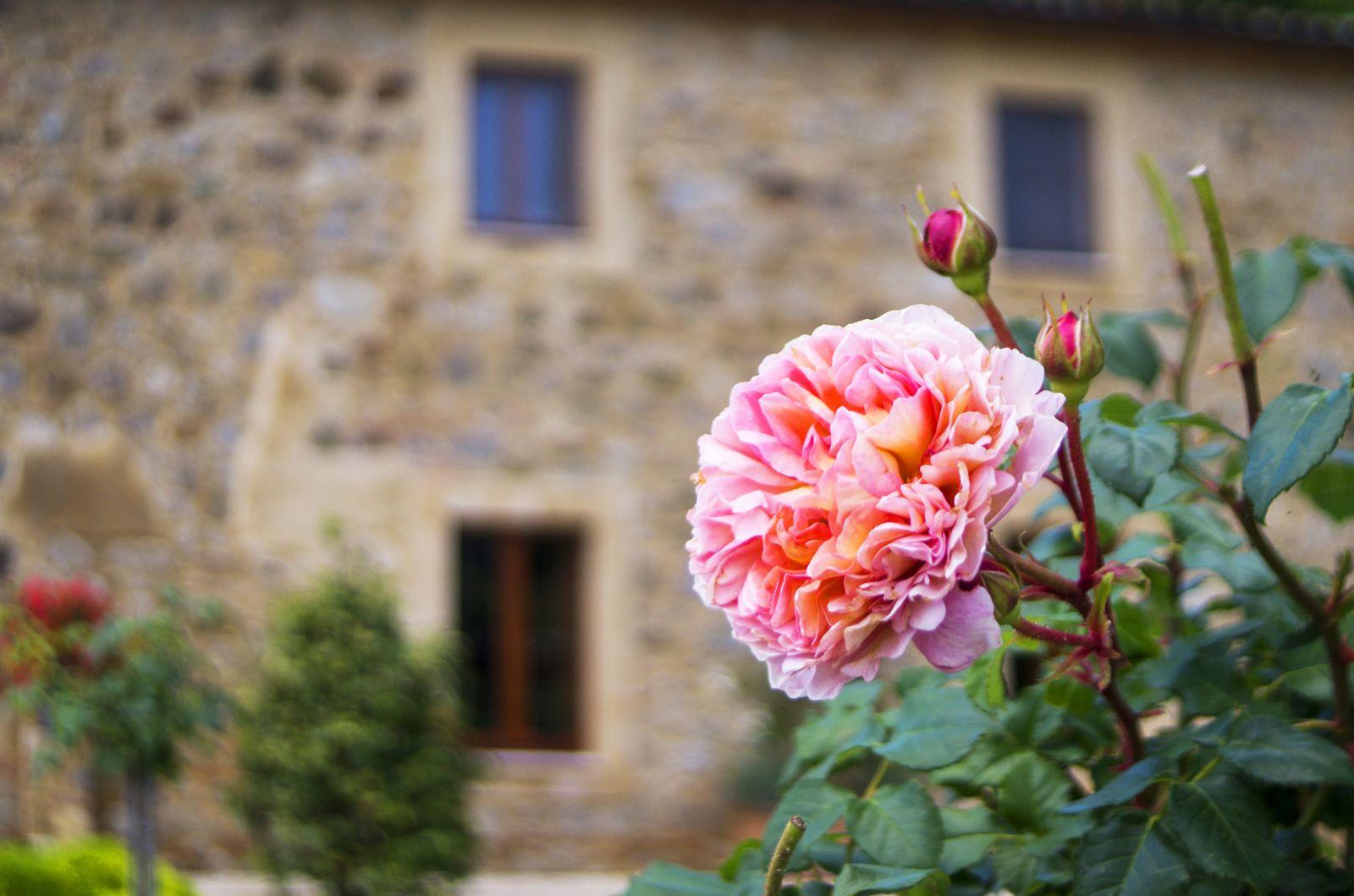 Gastblog van Marie-José Reynaerts: Bisconti, het verhaal achter onze restauratie en verhuizing