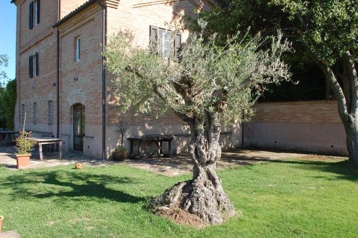 Le Marche : stenen villa met panoramisch uitzicht op wandelafstand van Sant'Angelo in Pontano